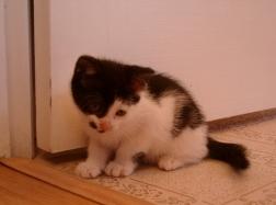 Nina at 7 weeks old